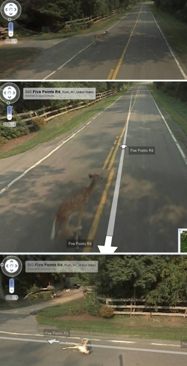 intaecourse:  google killed a deer
