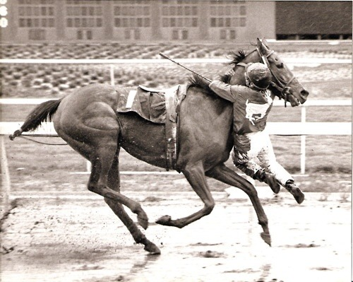 gee-in:  Feb. 3, 1989: Apprentice jockey Nate Hubbard hung on for second literally when his horse, Sweetwater Oak, stumbled near the finish line at Golden Gate Fields and flipped the rider out of his saddle. As he tumbled forward, Hubbard grabbed on to the filly's neck and hung in mid-air until the race was over. The track stewards ruled it an official finish because Hubbards feet never touched the ground and Sweetwater Oak carried her assigned weight throughout the race.