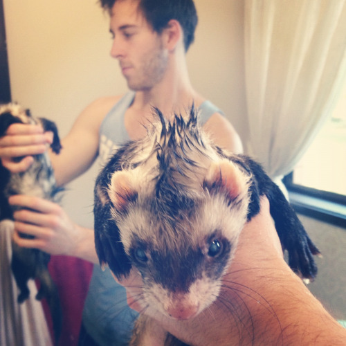 thegirlingumboots:  We washed Wiggles! Now he's fancy!