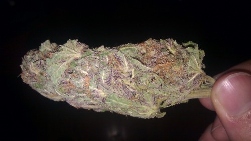 "Purple Barney currently what I'm working with.  People ask me if it's dank and I just want to be like ""are you fucking blind????"""