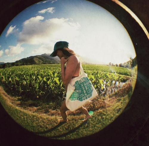 Bag Lady through the Kalo fields