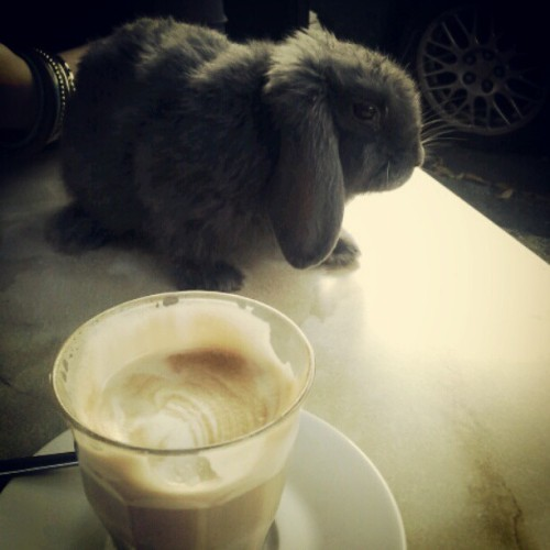 Caramel Latte with a side of Bunny @Grind with @everylittlewhisper #weheartbunnies #iloveyoumyadoptedsistafromanothermister