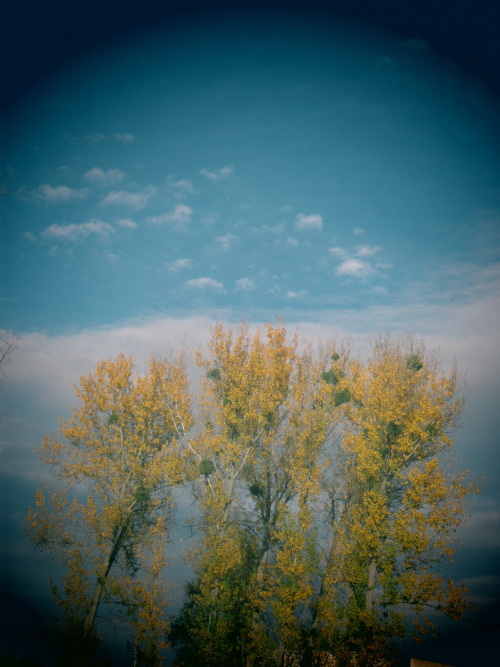 reaching for the clouds… yellow trees in Lozova, Moldova