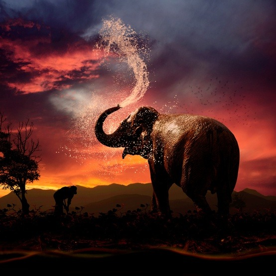 youthesty:  earthlynation:  Cooling down by Caras Ionut on 500px