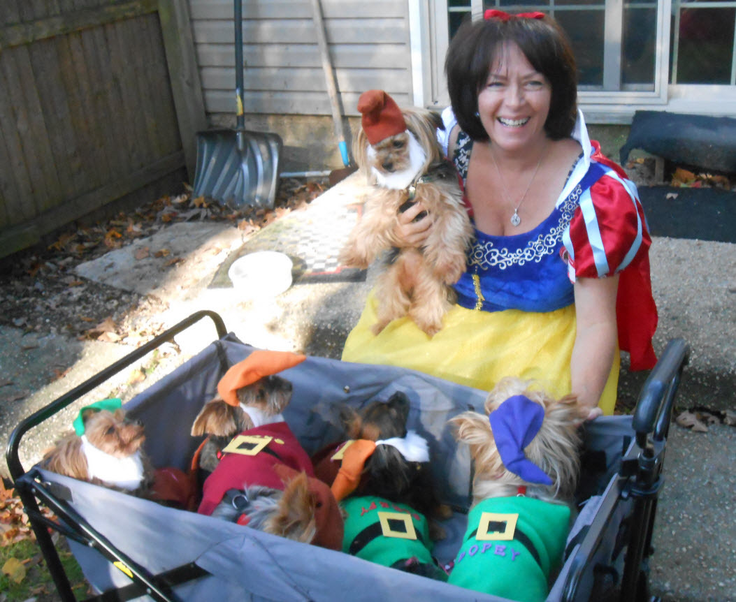 Halloween Costume Meetup - The Suffolk County Yorkshire Terrier & Small Dog Meetup Group
