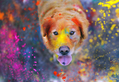 lindanotshealthylife:  Dogs. They run the color run.