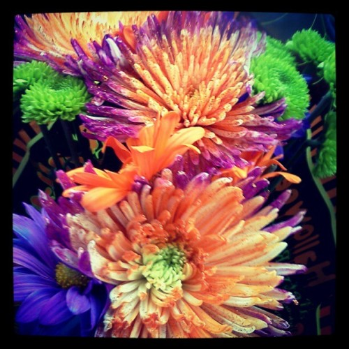 Halloween-rific, romantical flowers. #halloween #flowers #pretty #cute