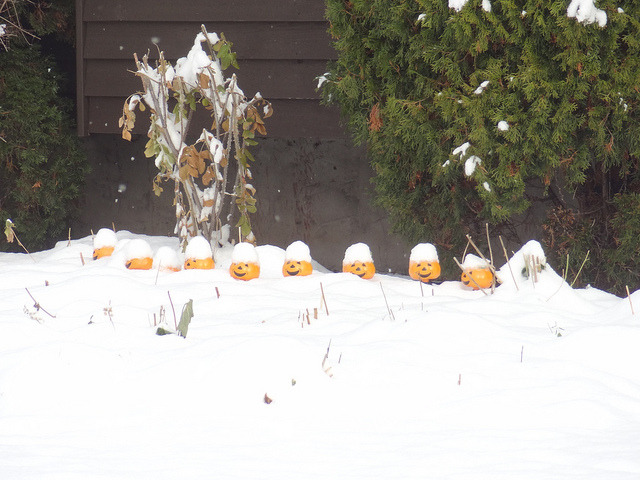 White Hallowe'en on Flickr.