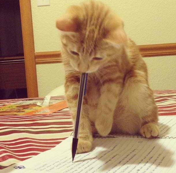 funnyordie:  Correction Cat