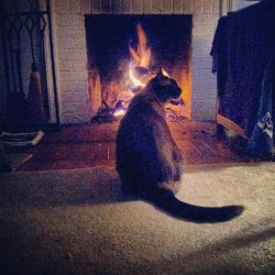 life of a house cat #kitty #cat #fireplace #picoftheday