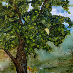 katethomasart:  Adam's Apple Tree