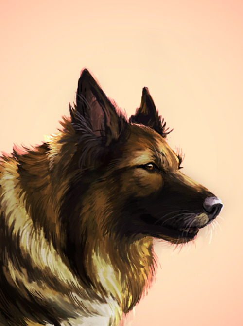 portrait of my dog ronja, who passed away this summer (as a birthday card for my mom)