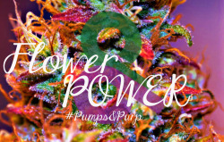 Flower Power  Pumps&Purp