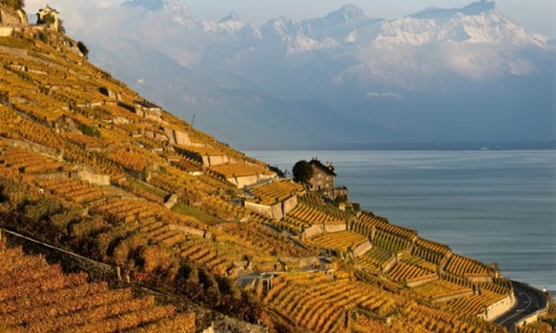 The autumn coloured vineyards of Lavaux on the shores of Lake Geneva, pictured in front of the snow-topped Swiss Alps, in Rivaz, Switzerland. The Lavaux Vineyard Terraces have been named a UNESCO World Heritage Sites since 2007. Photograph: Laurent Gillieron/EPA