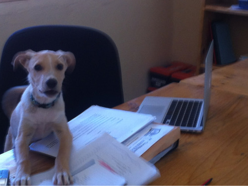 Ruff day in the office