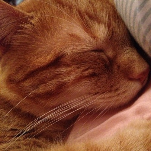 sweet-symphony:  My thunder buddy 💙