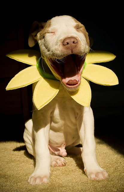 therealpitbull:  Hahaha! by Todd Duvall on Flickr.