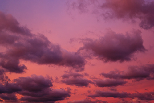 davidtribby:  rose color sky..