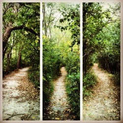 #path #forest #woods #nature #trees #green #natural #green #summer #bright #sunny #sun #skylight #earth #hike #camping #hiking #outdoors