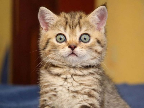 llbwwb:  Surprised Kitty! Todays Cuteness:) (via  NEWS IN PICTURES)