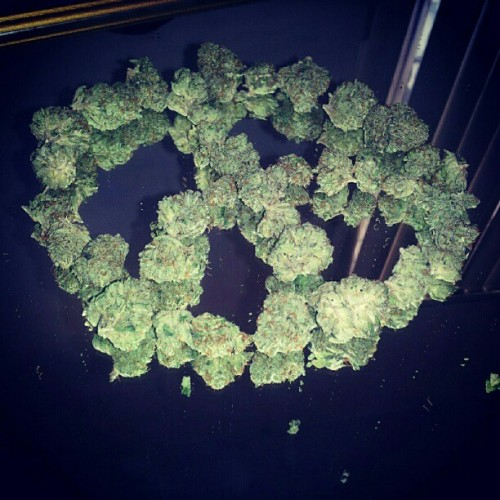#weed #peace #sign #Maryjane #marijuana #PeaceSign