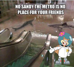 meme-spot:  Sandy… The place where your favorite memes hang out, Meme Spot