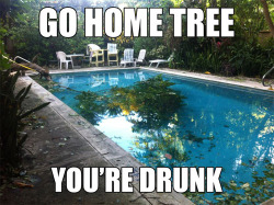 meme-spot:  Go home tree The place where your favorite memes hang out, Meme Spot