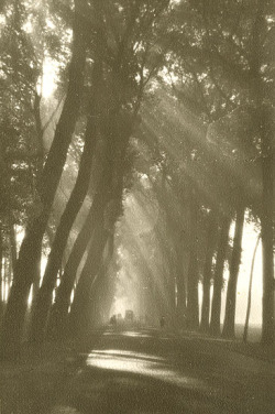 yama-bato:  Victor Guidalevitch - An Alley of Trees in Sunlight