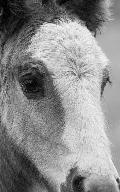 foal portrait by Yazz2 on Flickr.