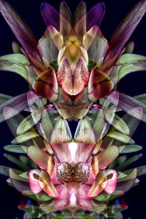 """Floral Mirror I"" © Copyright - 2012 - All rights reserved To see more of my work please check out my other web sites:  http://www.twotone.net/ http://www.facebook.com/crblumphotohttp://crblum.tumblr.com/"