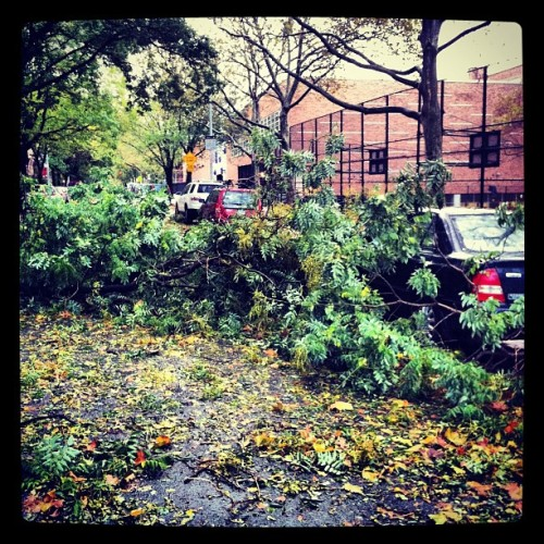 Adelphi Street, Fort Greene, post storm.