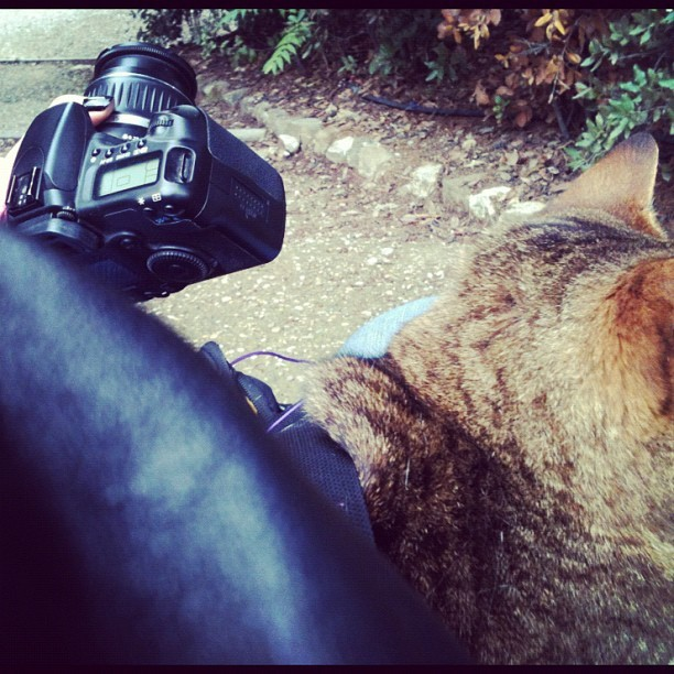 Yes that is a #wild #cat snuggling up to my leather jacket in the Bardini Gardens while I'm supposed to be on a photo shoot. #iseenoproblem #catlady4lyf (at Giardino Bardini)