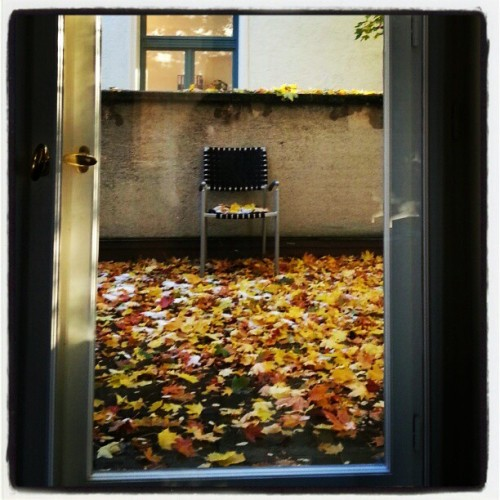 bigstarlet:  Fall drops (at Leopoldstr.)