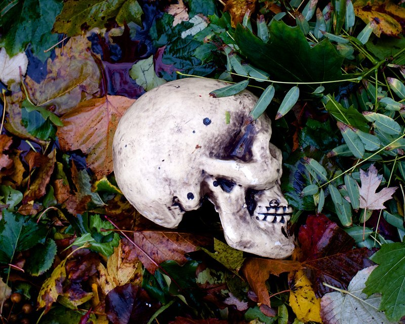 Hurricane Sandy's Skull Spotted in Bay Ridge, Brooklyn