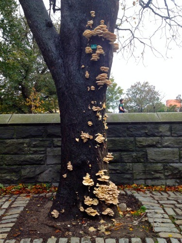 Spotted in Fort Greene Park. I don't think this has anything to do with Sandy, but dang is it cool.