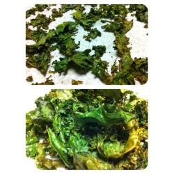 🍃 #Kale chips. Evoo, sea salt, garlic powder, and blk pepper. Spread evenly on parchment paper. Bake for 10-15mins at 350 till brown (but not burnt) on edges. #done #yum #nom #snack #healthy #instagood #instagramfitness #instafood #food #grub #eatclean #eatright #goodfood #veggies #greens #superfood #nutrition #nudetummyeats 🎈