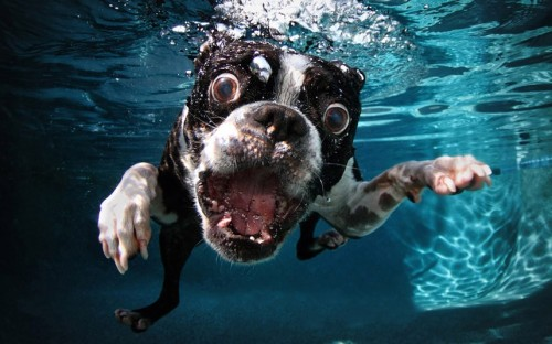 Underwater Dogs: photographs of dogs underwater by Seth Casteeltelegraph.co.uk
