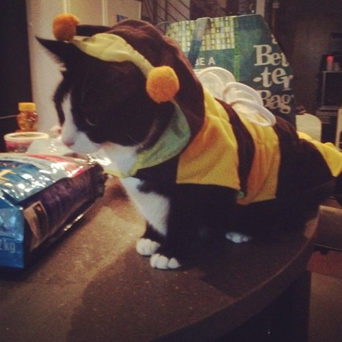 deadmau5:  Happy Halloween from meowingtons.
