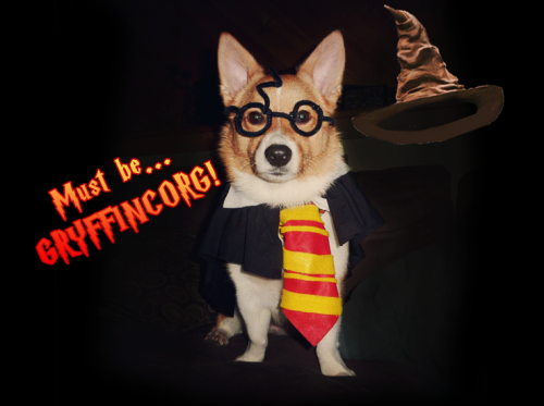 Jayden representing house Gryffincorg! Mommy lost a few fingerprints in the process making said costume, but so worth it! ;) She's #81 in the costume contest!  Happy Howl-o-ween everyone!!