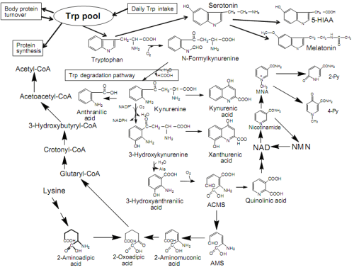 Figure 1 from 'Fate of Dietary Tryptophan in Young Japanese Women' Published in International Journal of Tryptophan Research