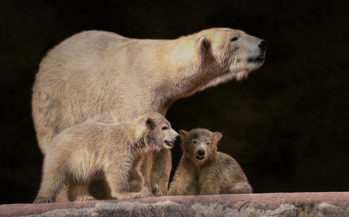 "earth-song:  ""little family"" by Sonja Probst"