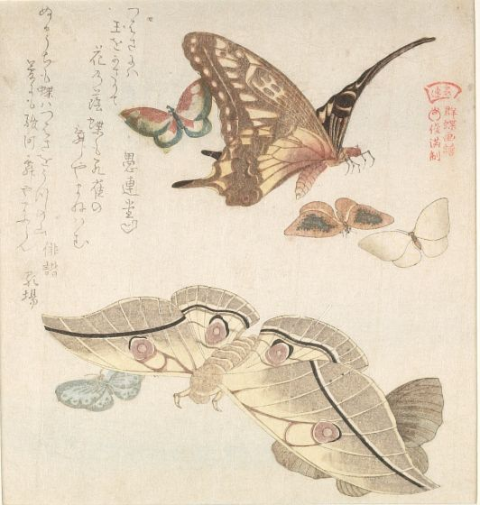 atelierentomologica:    Moth and Butterflies Surinomo print by Kubo Shunman, Japan C19