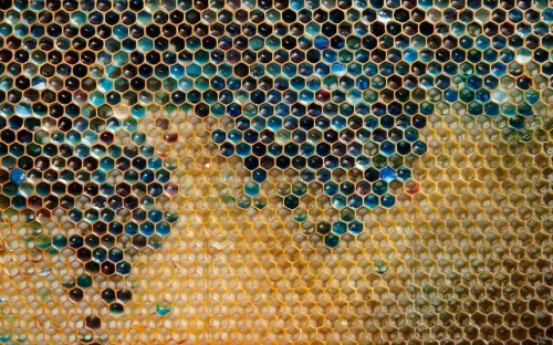 creepicrawlies:  A coloured honeycomb from a beehive is seen in Ribeauville near Colmar, Eastern France. Bees in the area have been producing honey in mysterious shades of blue and green. Beekeepers now believe residue from containers of sweets - brightly coloured M+Ms at a nearby Mars plant - is to blame.   Picture: REUTERS/Vincent Kessler  Interesting…