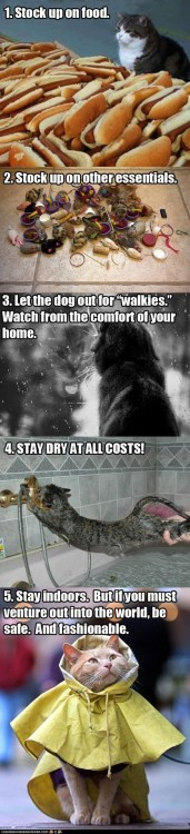 Hurricane Sandy From A Cat's Perspective