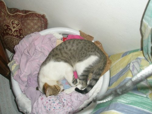 get out of there cat. you don't need to be washed with the other clothes. you can wash yourself.