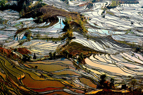 DSC_8056 riziéres province du Yunnan by ichauvel on Flickr.