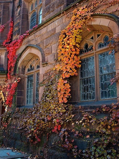 Autumn Ivy, Princeton, New Jersey photo via roosje