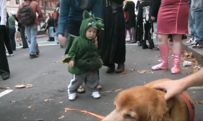 "Happy Halloween!  This mini dragon is making his way over to Charlie's dog, Lucky, at the Salem, Mass Halloween parade.  Did You Know?   Celebration of Halloween was extremely limited in colonial New England because of the rigid Protestant belief systems there… As the beliefs and customs of different European ethnic groups as well as the American Indians meshed, a distinctly American version of Halloween began to emerge. In the second half of the nineteenth century, America was flooded with new immigrants… Taking from Irish and English traditions, Americans began to dress up in costumes and go house to house asking for food or money, a practice that eventually became today's ""trick-or-treat"" tradition.   History.com"