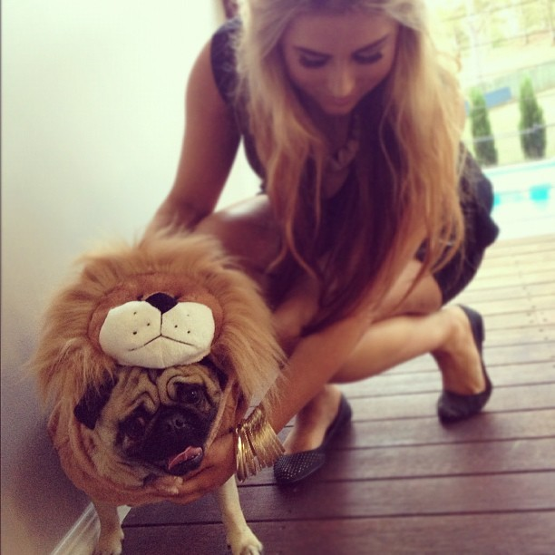 Frankie is a lion what a Cuttieeee 😙💕 🐶 #instagram #instapug #pug #pugsnotdrugs #puglife #halloween #cute #amazing #lion #pretty #dress #hair #forever #mybaby #photo #photography