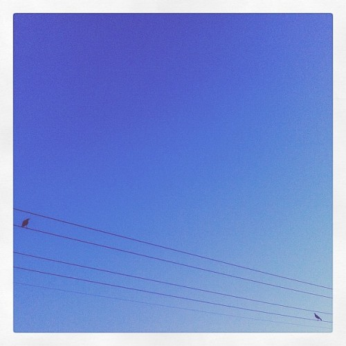 Just a couple of birds, chillin on the old power lines..
